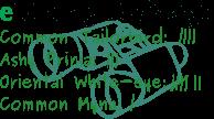 challenge-logo-2015