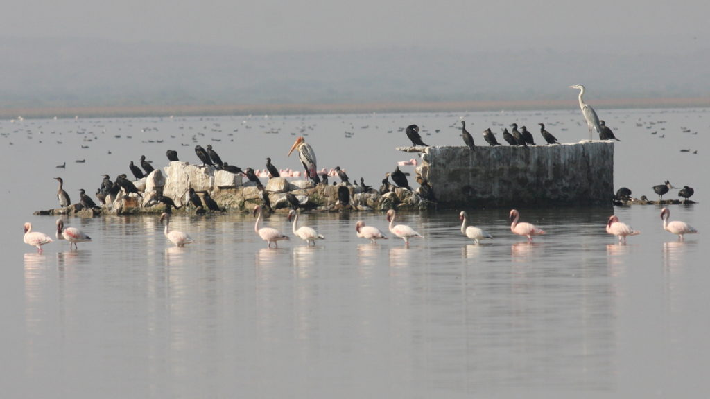 Cormorants in a large lake amongst other wetland species