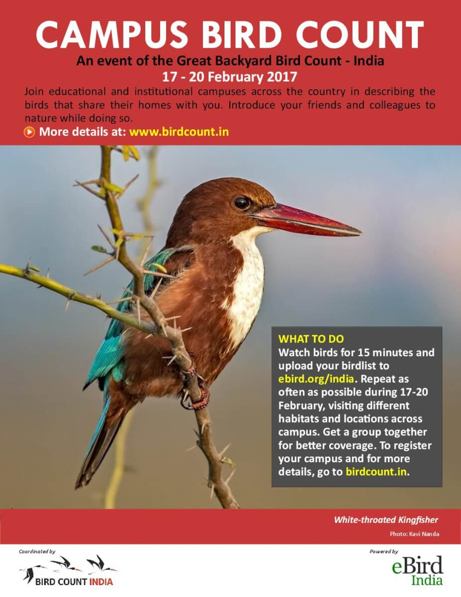 great backyard bird count 2017 bird count india page 4