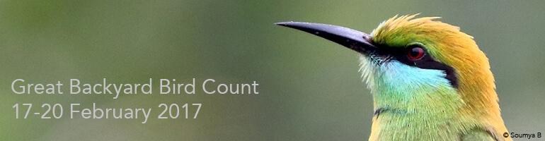 great backyard bird count 2017 bird count india