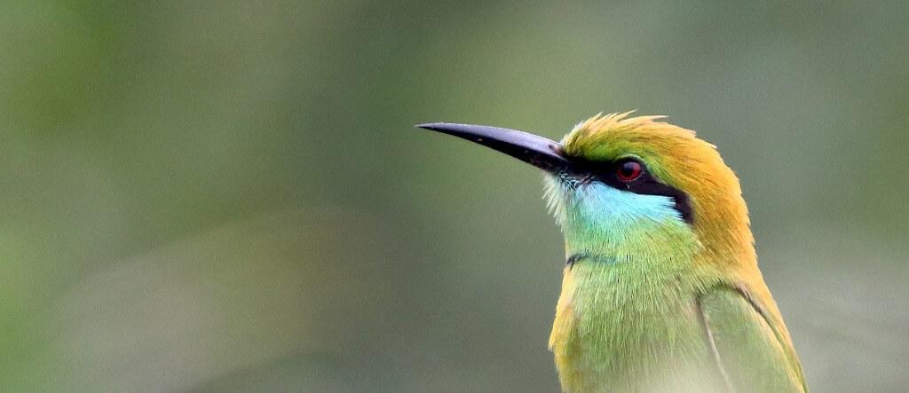 great backyard bird count 2017 results bird count india