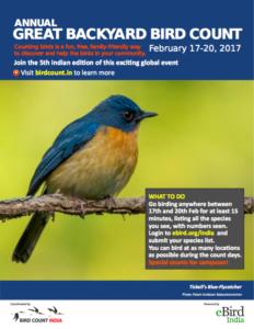 great backyard bird count india 17 20 feb 2017 bird count india