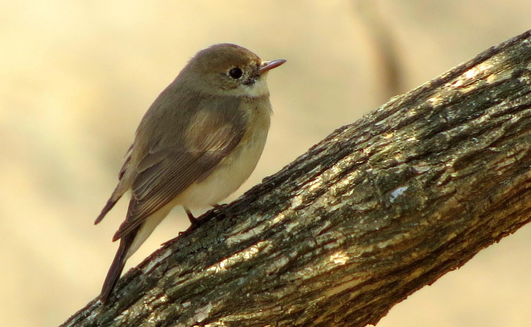 great backyard bird count 2017 photos bird count india